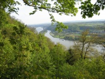 Rheinsteig #1 - Rheinblick
