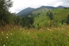 Karpaten - Magura