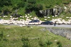 Karpaten - Kleine Verkehrsstörung