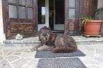 Karpaten - Einer unserer Haushüter
