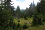 Karpaten - Aufstieg Richtung Piatra Arsa
