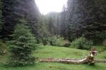 Karpaten - Auf dem Weg nach Moeciu de Sus