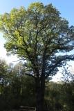 Sauersteig – Lüerwald und Bieberbach – Oesbern - Die dicke Berta
