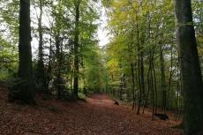 Track & Trail Felderbach