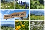 Kitzbüheler Alpen – Rund ums Kitzbüheler Horn - Alpenblumengarten