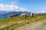 Kitzbüheler Alpen – Vom Wildpark Aurach nach Kitzbühel