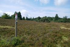 Uplandsteig - Vom Ettelsberg nach Willingen - Niedersfelder Hochheide