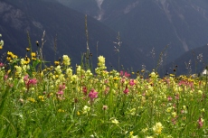 Via Engiadina - Blütenpracht