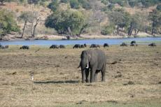 Botswana - Im Chobe-Nationalpark