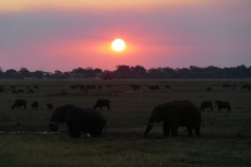 Botswana - Sonnenuntergang im Chobe-Nationalpark