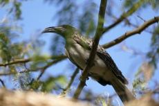 Botswana - Vögel im Garten der Nata Lodge