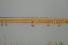 Botswana - Gnus und Flamingos in der Makgadigadi-Salzpfanne