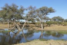 Botswana - Am Khwai-Fluss