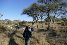 Botswana - Im Gänsemarsch durch den Busch