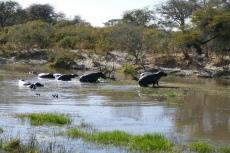 Botswana - Huch, da kommen Menschen...