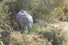Botwana - Elefant am Khwai