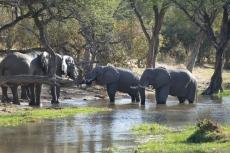 Botswana - Elefanten im Khwai