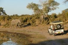 Botswana - Die waren uns im Weg...
