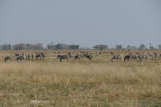 Botswana - Zebras und Antilopen auf einer Insel im Okavangodelta