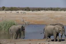 Namibia - Hochbetrieb am Wasserloch im Etosha-Nationalpark
