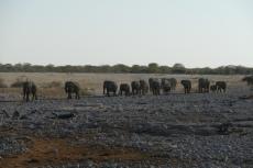 Namibia - Elefanten auf dem Weg zum Wasserloch