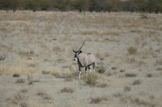 Namibia - Wir haben sogar ein Einhorn gesehen
