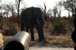 Botswana - Mal wieder ziemlich nah dran