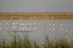 Botswana - Flamingos in der Makgadigadi-Salzpfanne