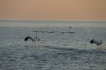 Botswana - Pelikane in der Makgadigadi-Salzpfanne