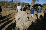 Botswana - Ranger Allan erklärt den Termitenhügel