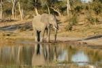 Botswana - Elefanten am Khwai