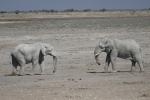 Namibia - Elefanten im Etosha-Nationalpark