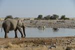 Namibia - Am Wasserloch von Okaukuejo