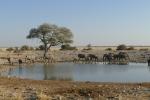 Namibia - Elefanten am Wasserloch von Okaukuejo