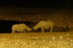 Namibia - Nashörner am beleuchteten Wasserloch von Okaukuejo