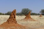 Namibia - Termitenhügel