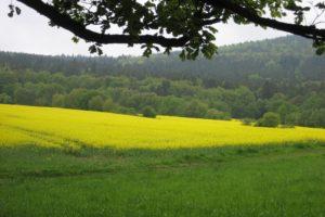 Rheinsteig #13: Von Assmannshausen nach Kiedrich