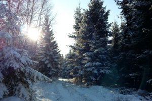 Mit dem Wanderschuh rund um Nieringsen