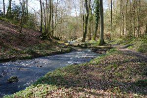 Read more about the article Wandertag Neanderland II – Vor den Toren Mettmanns