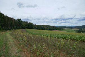 Lahn-Dill-Bergland-Pfad #04 – Von Gladenbach bis Caldern