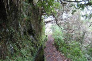 Madeira: Wanderung zum Caldeirão Verde