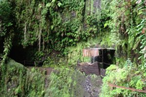 Read more about the article Madeira: Entlang der Levada da Janela