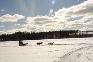 Lapplands Drag – Husky Expedition: Einführung und Vorbereitung