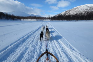 Lapplands Drag – Husky Expedition: Auf ins Gebirge…