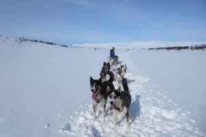 Lapplands Drag – Husky Expedition: Abstecher nach Norwegen