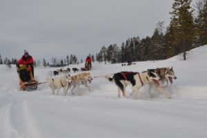 Read more about the article Lapplands Drag – Geführte Huskytour: Tag 5
