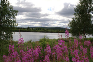 Read more about the article Kiruna – Kautokeino: Eisenerz und Birkenwälder