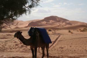 Marokko: Kameltrekking durchs Erg Chebbi
