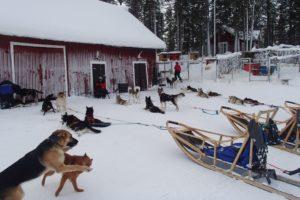Lapplands Drag – Geführte Huskytour: Tag 2