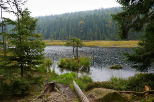 Read more about the article Bayerischer Wald | Kleiner Arbersee